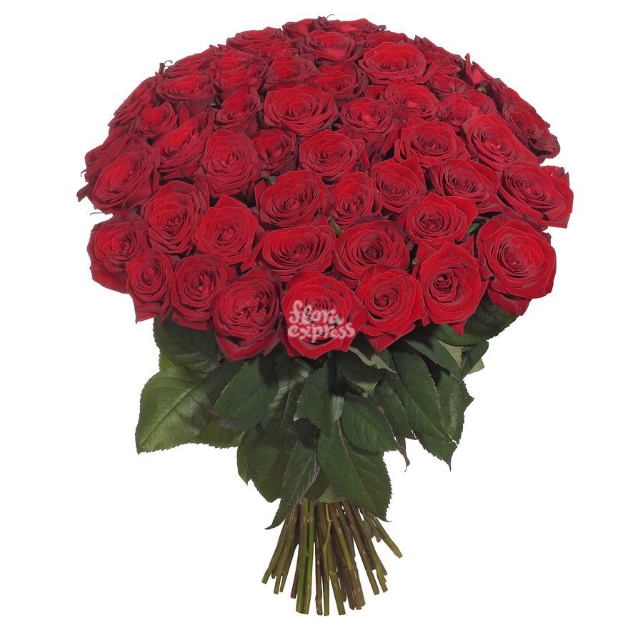 Доставка цветов из брюсселя в екатеринбург голубые розы в горшках купить